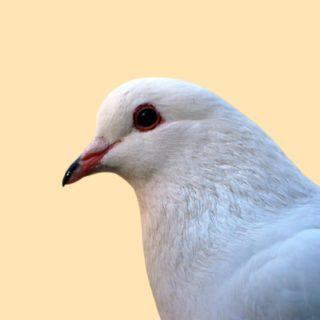 pigeon Archives | Zikoko!
