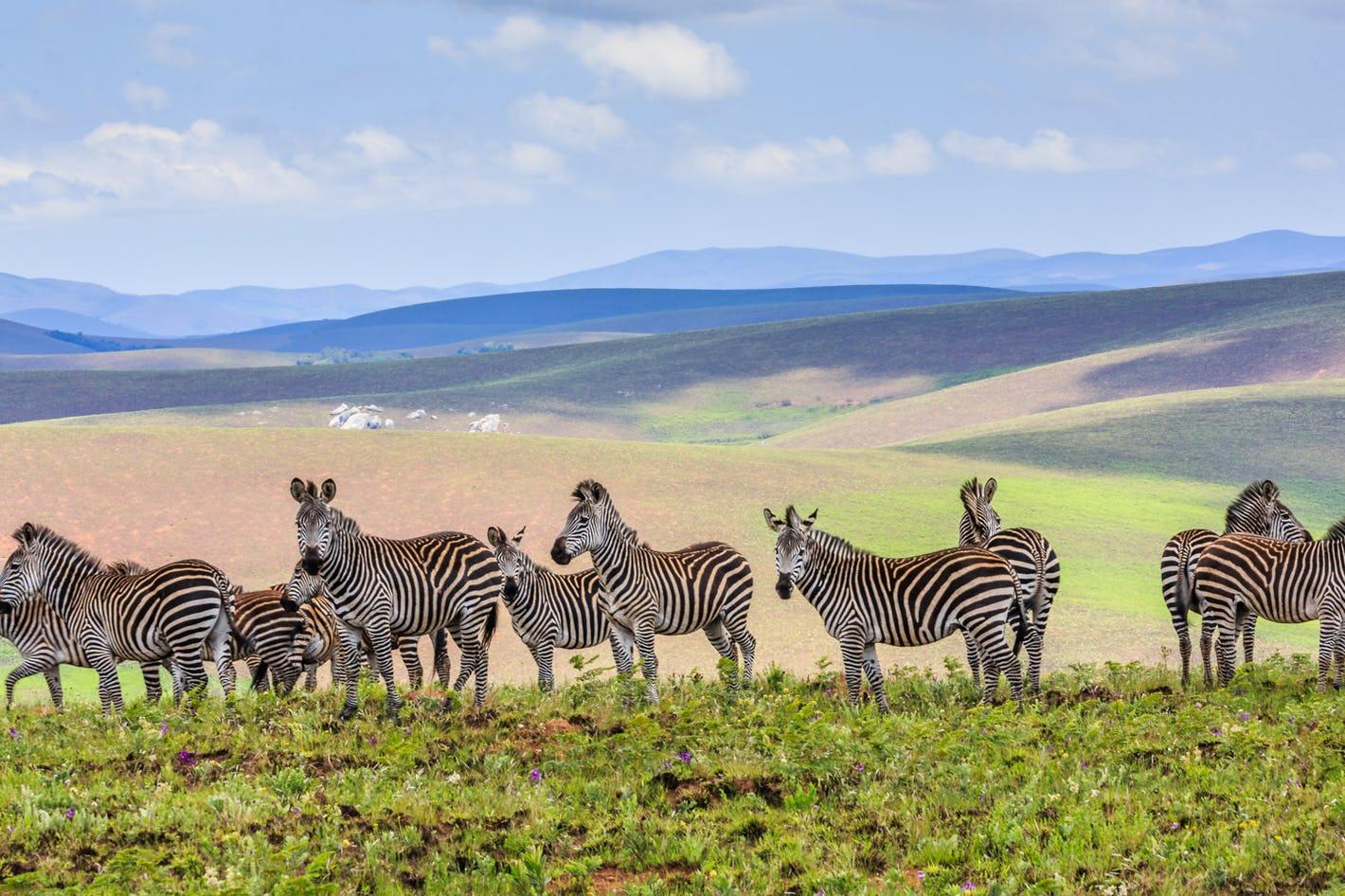 Where is Nyika Plateau National Park?