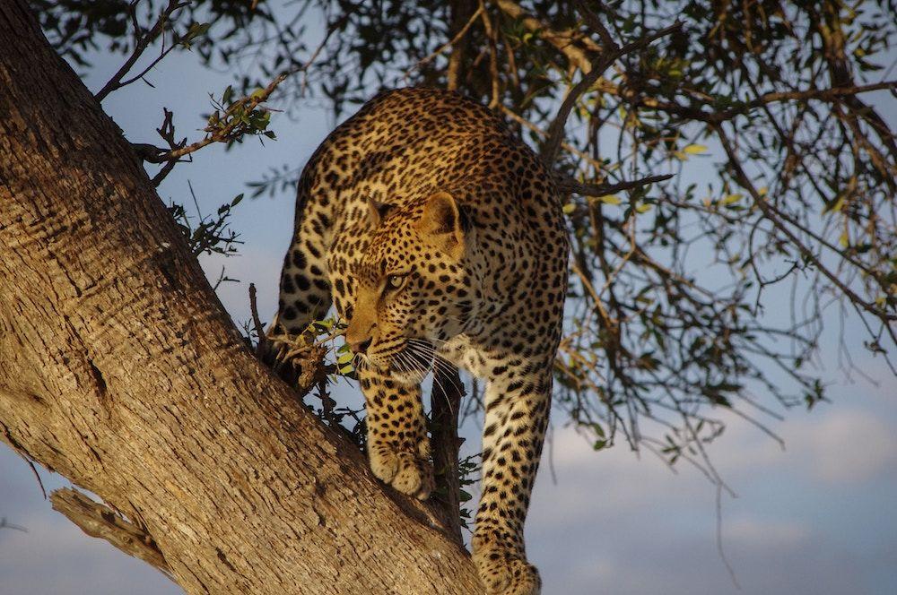Where is Okavango Delta?