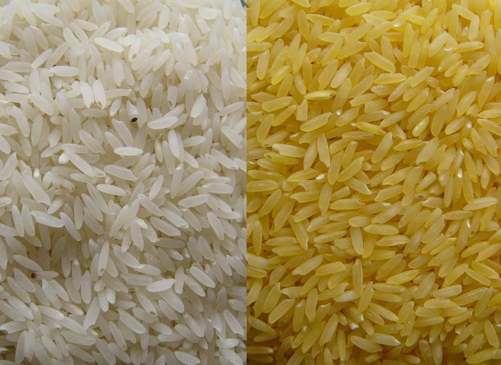 Which rice do you prefer?